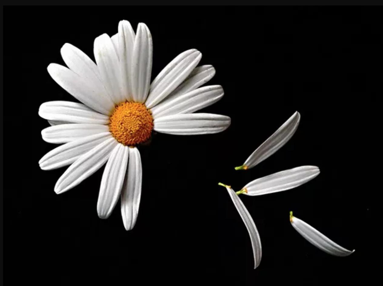 Simpatia com flor